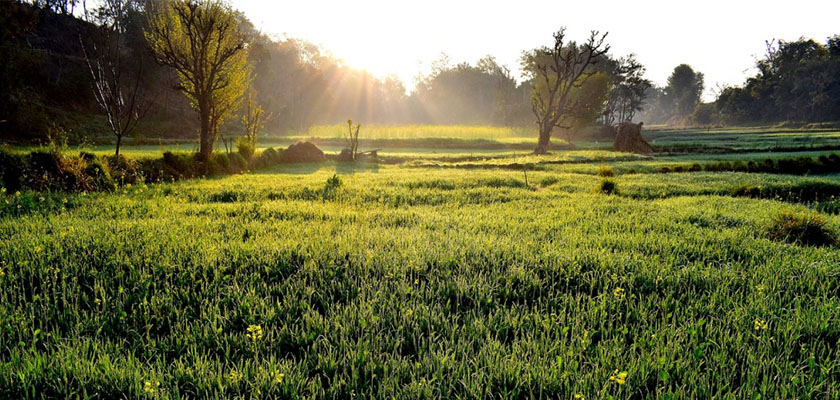 Biokleidung gruene umweltfreundliche umgebung