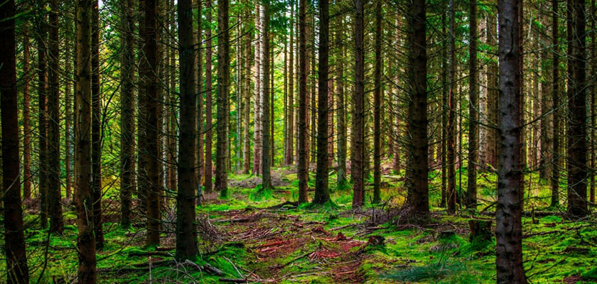 Biokleidung umwelt wald natur